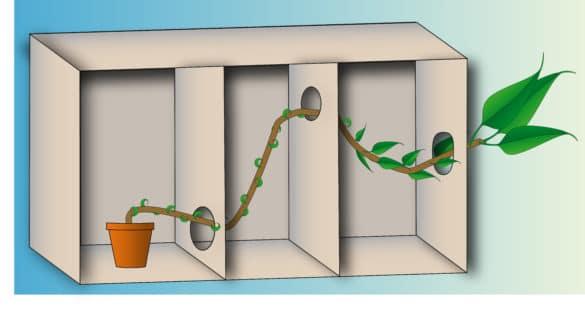 Darstellung von Phototropismus - Wachstumsregler