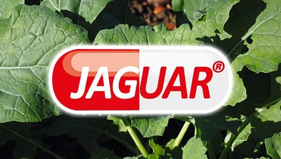 Jaguar - PLANTAN