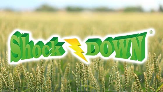 Shock Down - PLANTAN